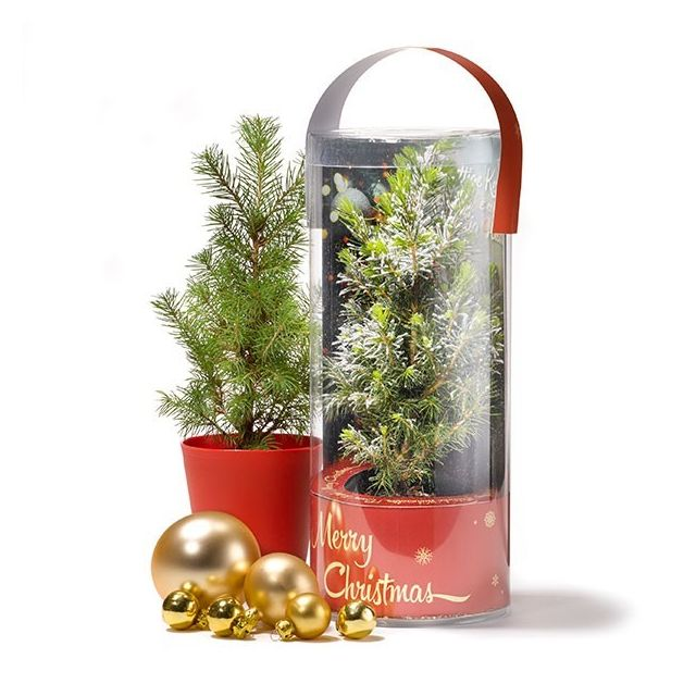 Kerstboom in koker - standaard