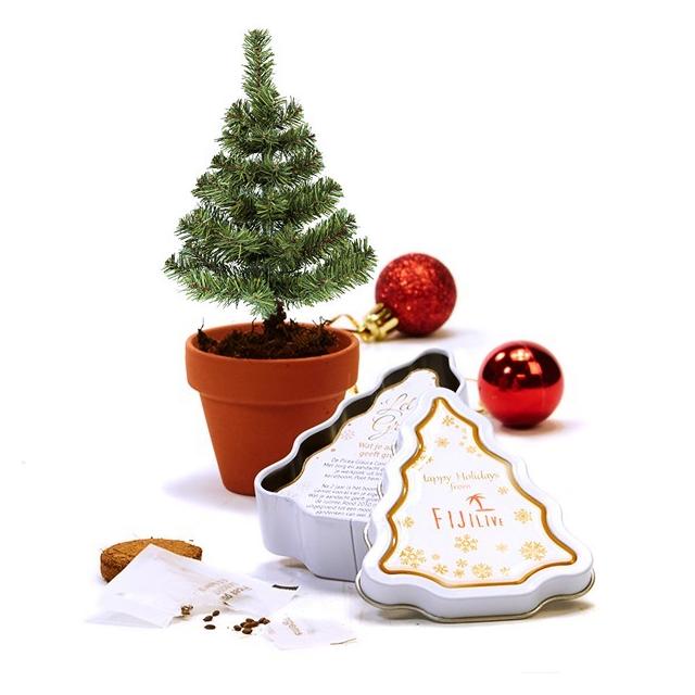 Christmas tree to be - kweekset in blik
