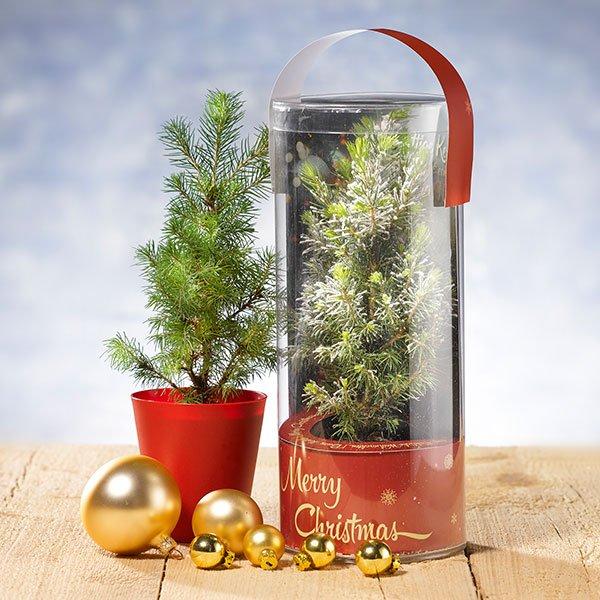Kerstboom in koker sfeerfoto