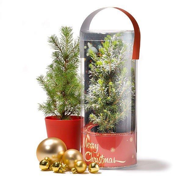 Kerstboom in koker – standaard