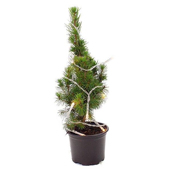 kerstboompje met verlichting